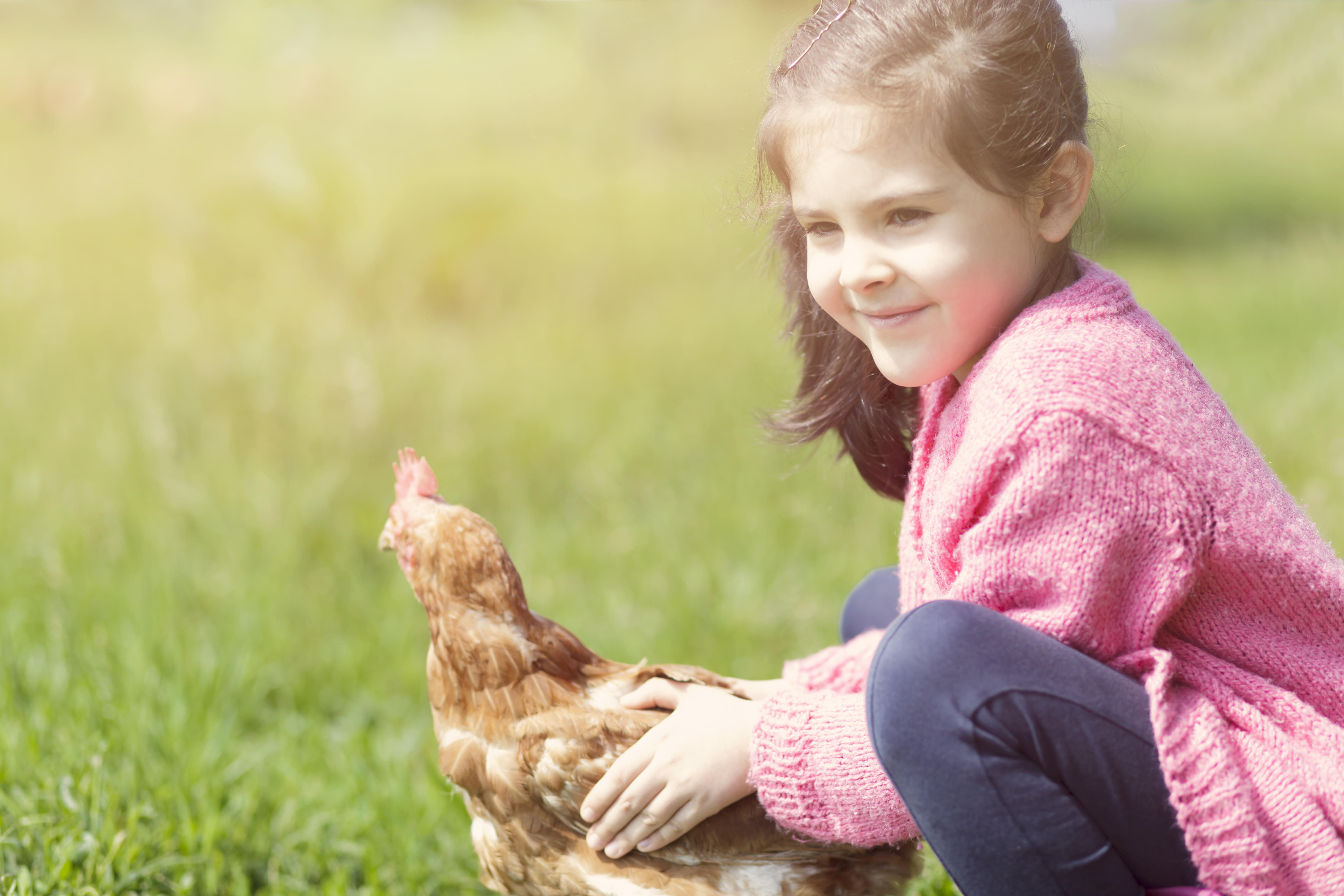 keeping backyard chickens comes with a human health risk cdc