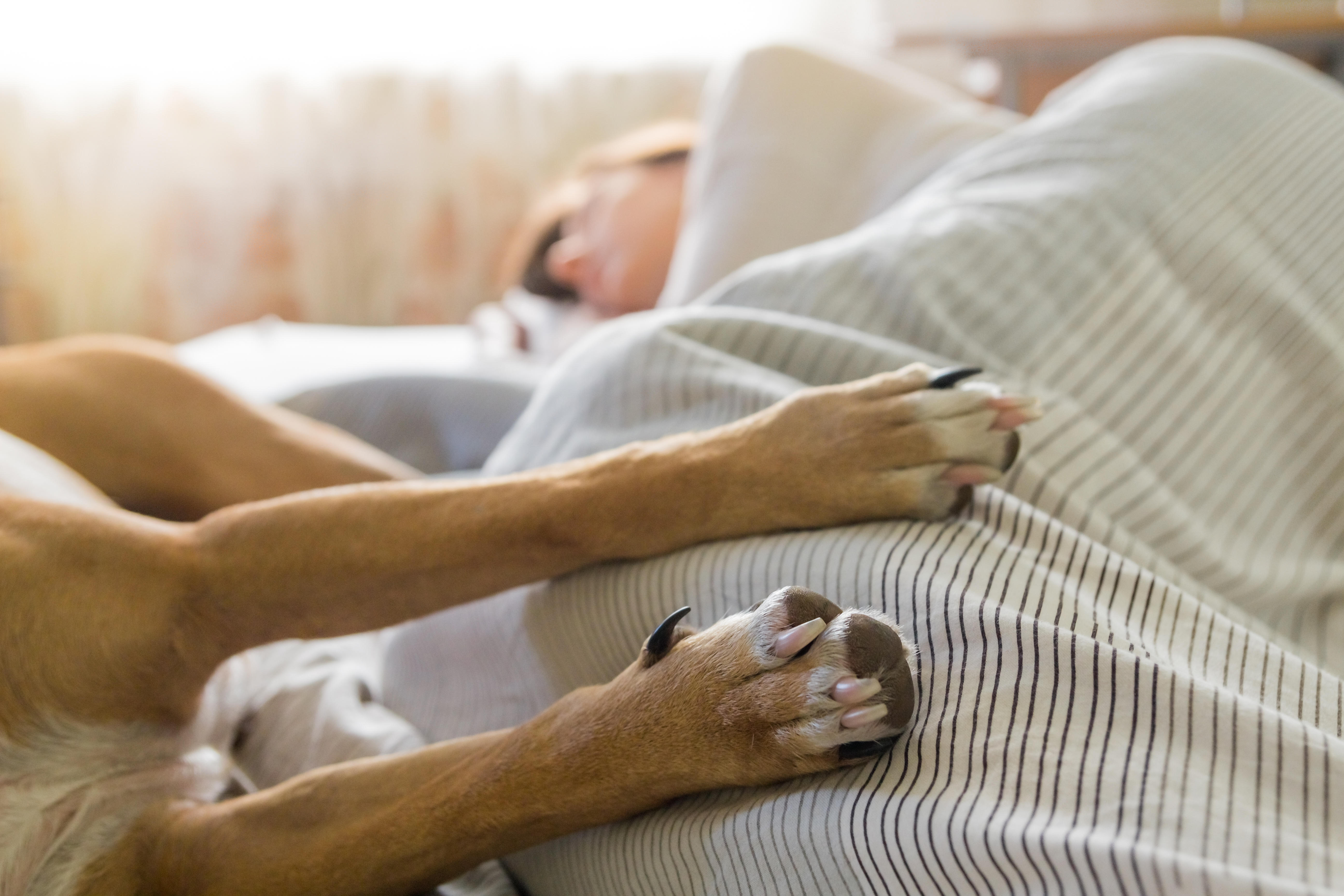Is It A Good Idea To Let Your Dog Sleep In The Bedroom Cbs News