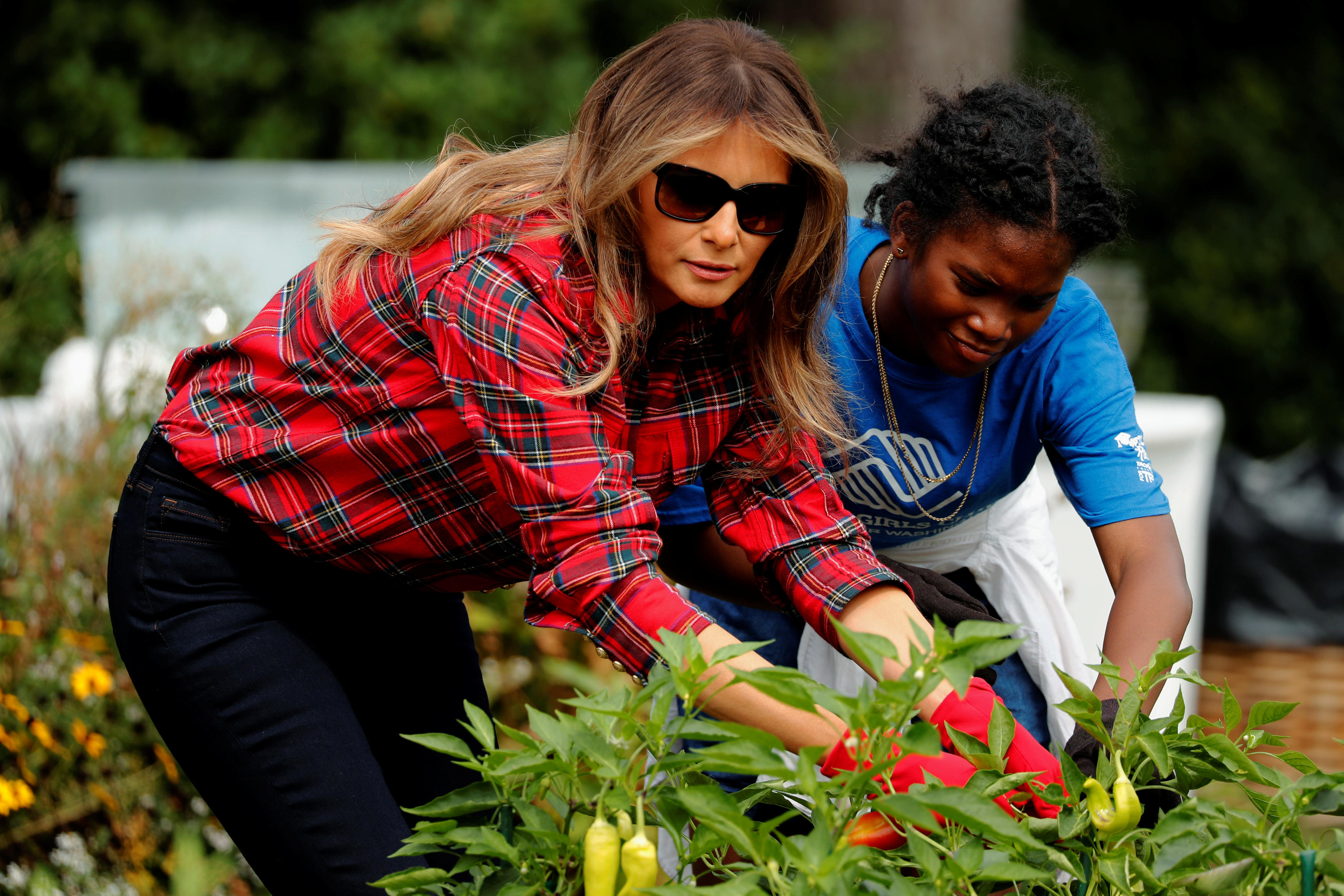 Melania Trump Harvests And Plants In White House Garden Cbs News