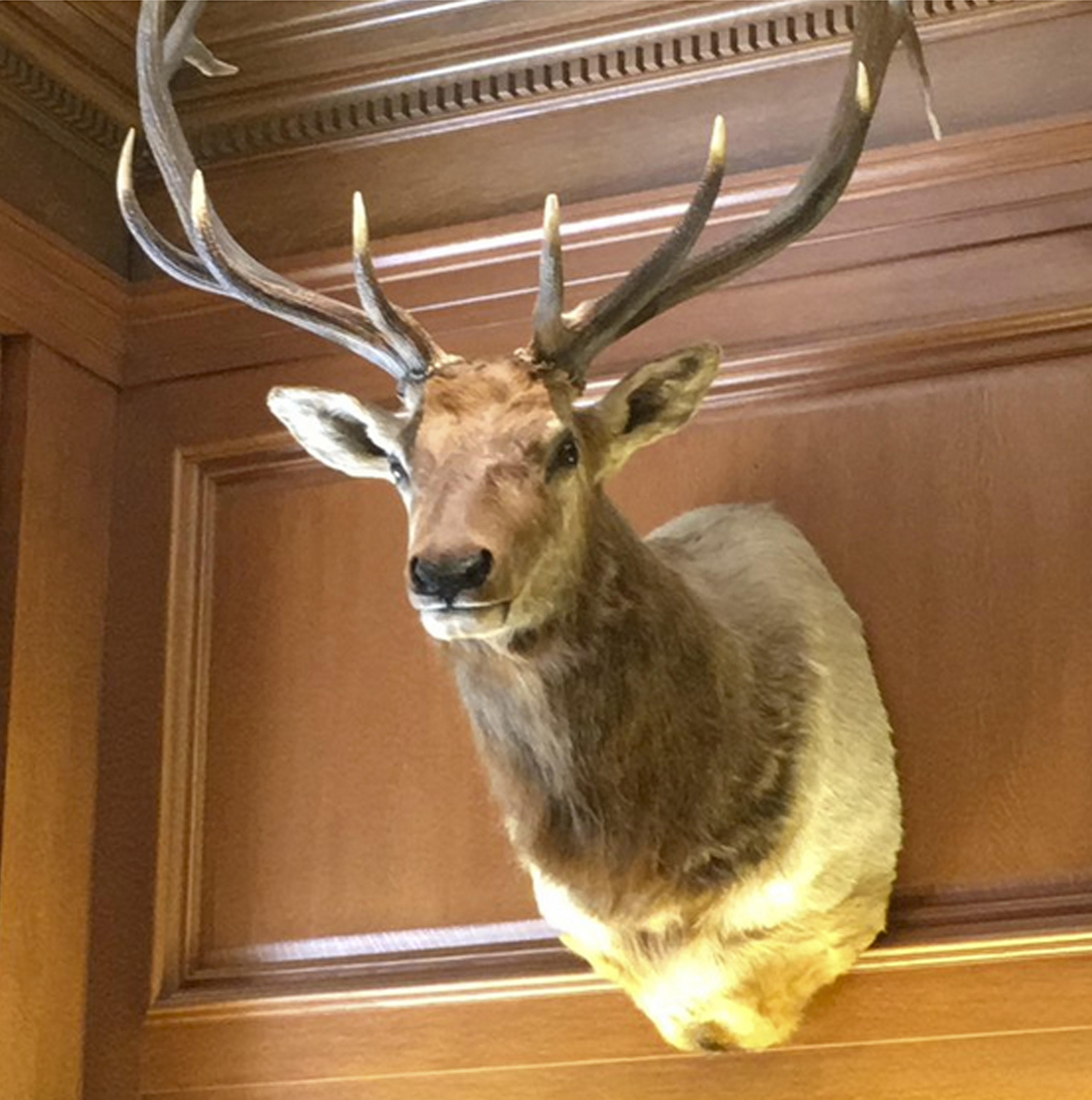 Neil Gorsuch Has An Elk Named Leroy For An Officemate