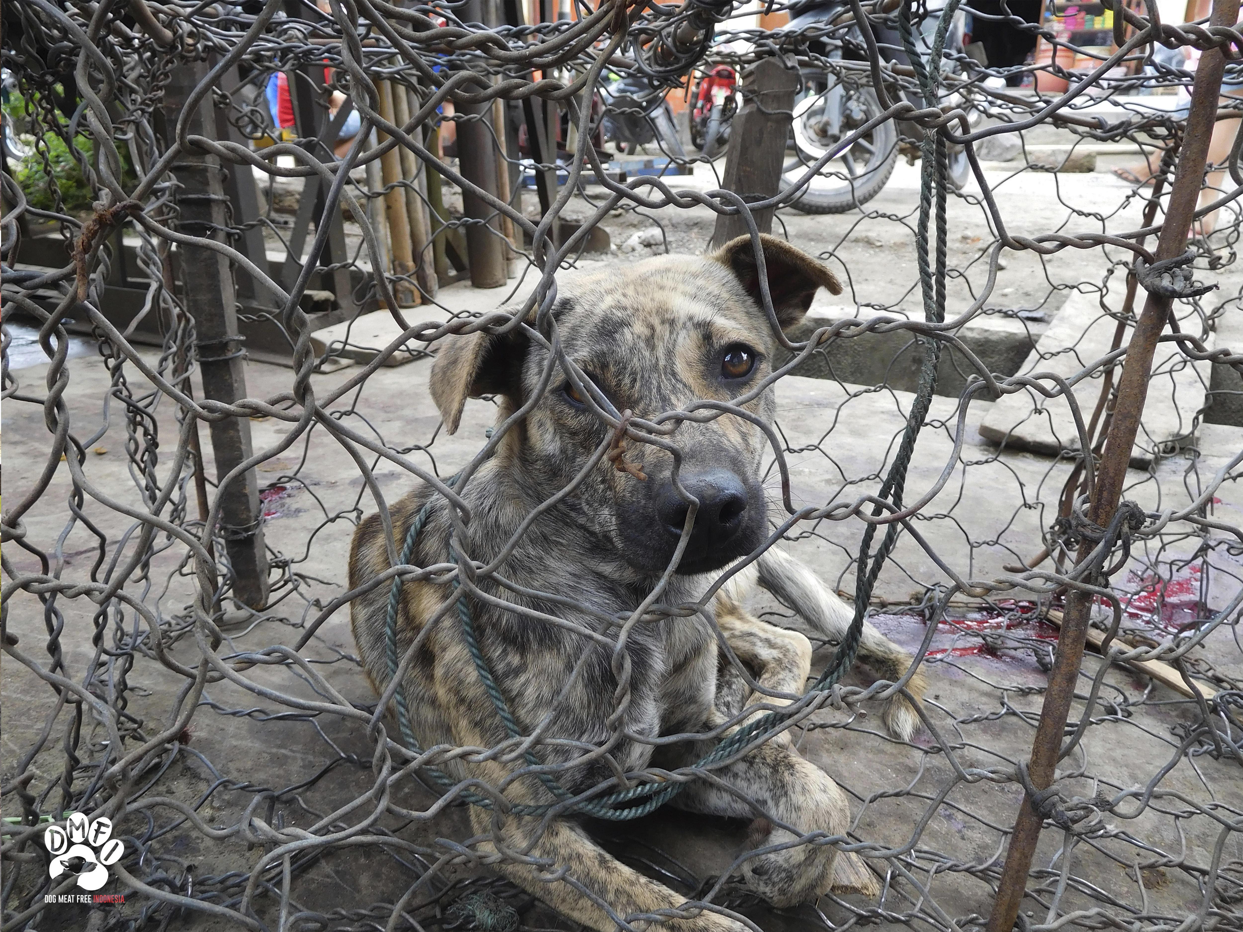 26++ Pasar hewan di indonesia terbaru