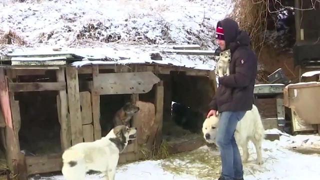 South Korea's president raisesban on eating dog meat