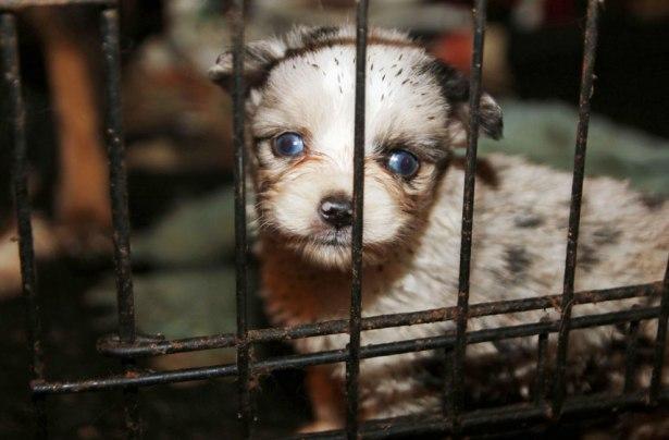 Dead Puppies Found In Kitchen Freezer At Alleged Puppy Mill In Texas
