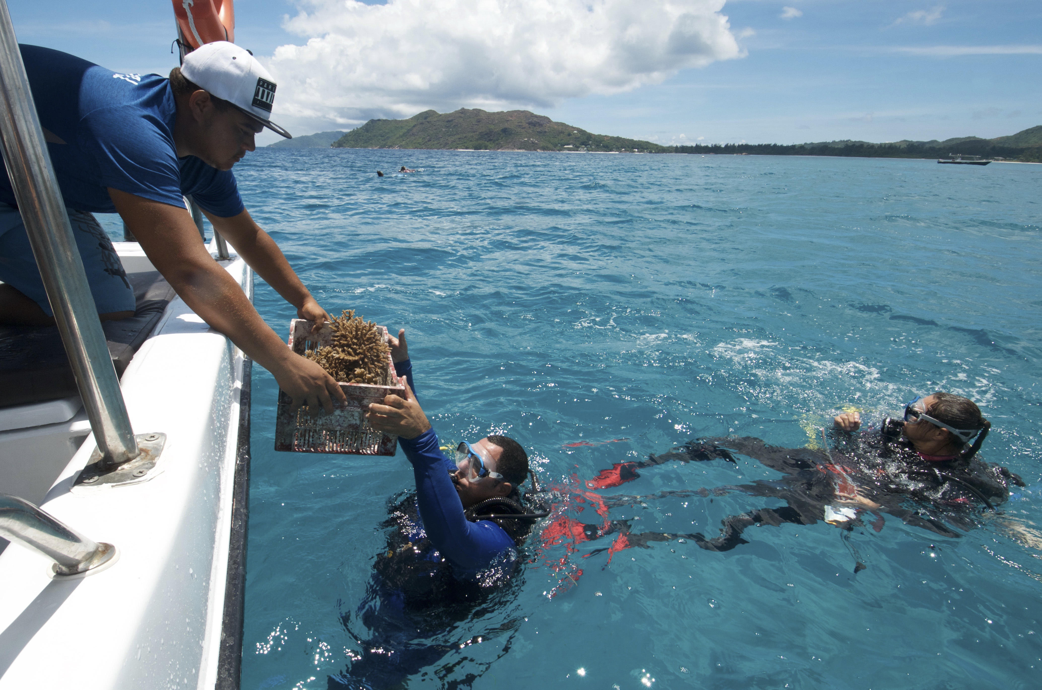 Fight Mounts To Save Coral Reefs In The Seychelles Cbs News