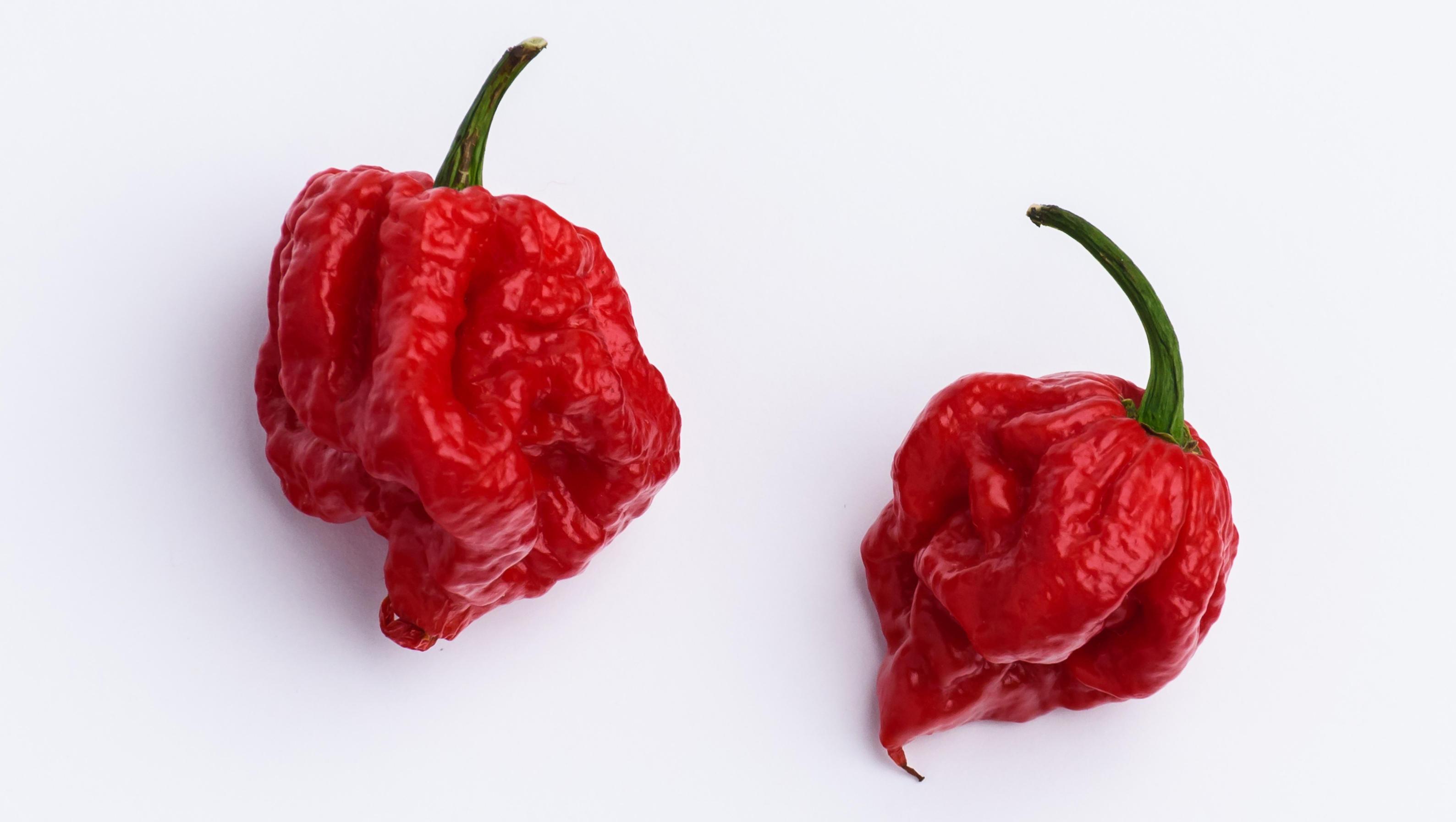 world s hottest chili pepper carolina reaper sends man to the