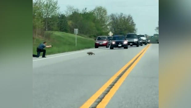 Carroll County Sheriff's deputy fatally shoots groundhog as it