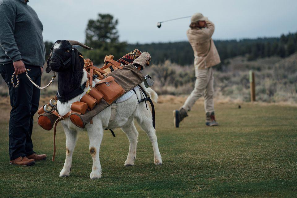 Play golf with a goat caddie at this Oregon ranch - CBS News