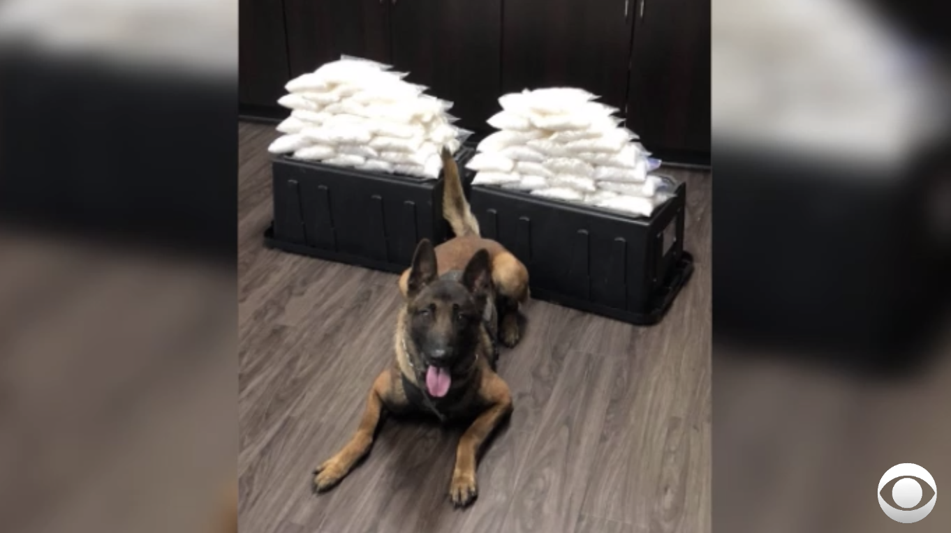 Rookie K-9 sniffs out 60 pounds of meth in his first drug