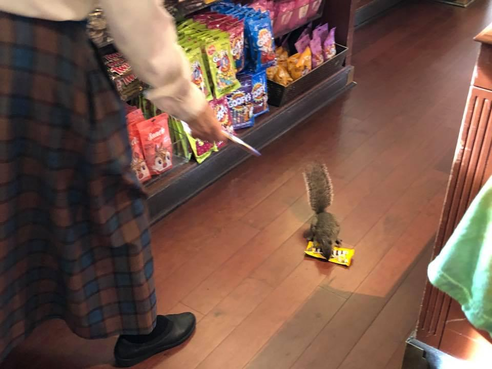 Shoplifting squirrel caught on camera stealing from store in Disney