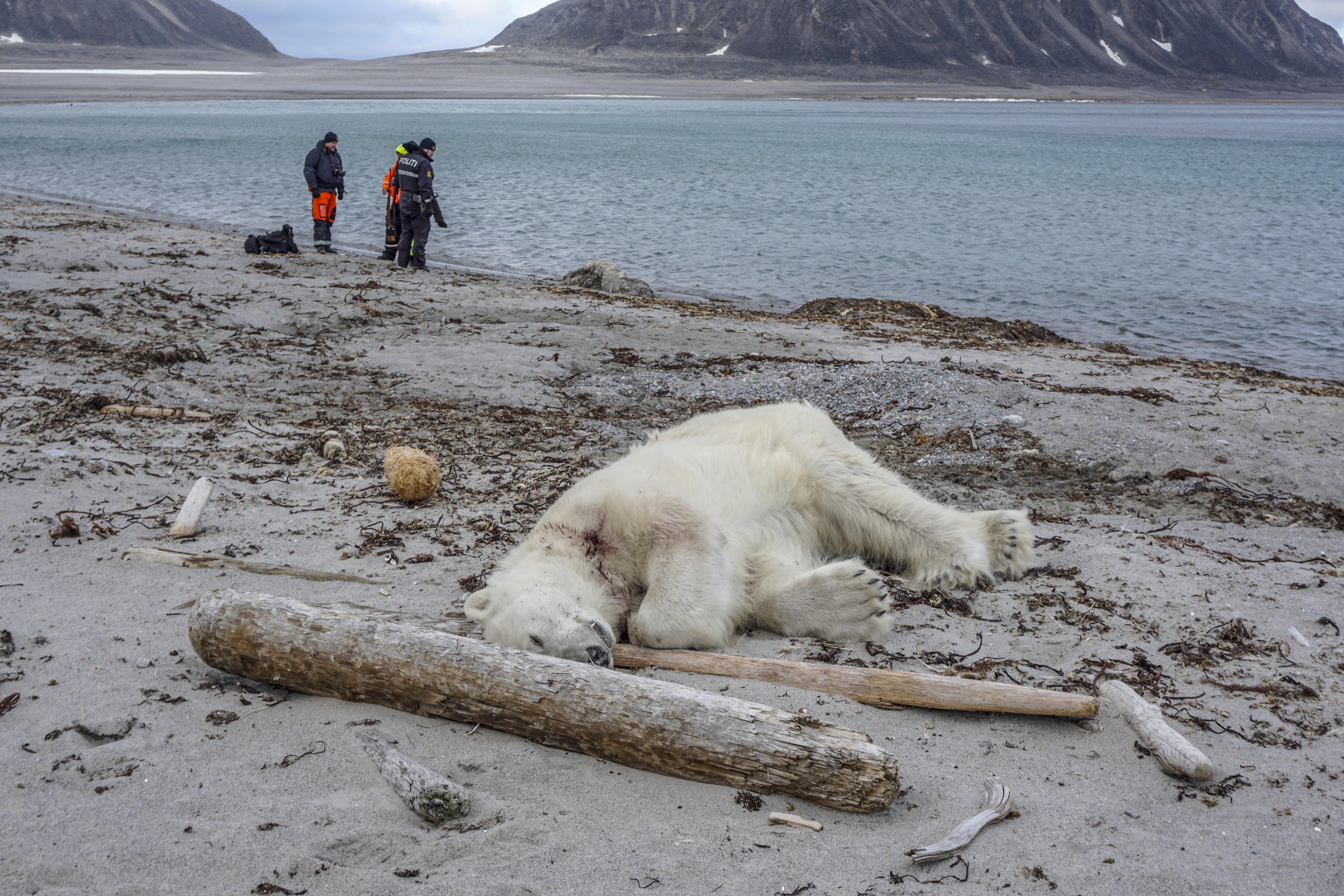 Cruise ship guards' killing of polar bear sparks international outrage