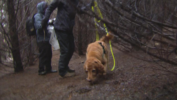 On the hunt with truffle-sniffing dogs - CBS News