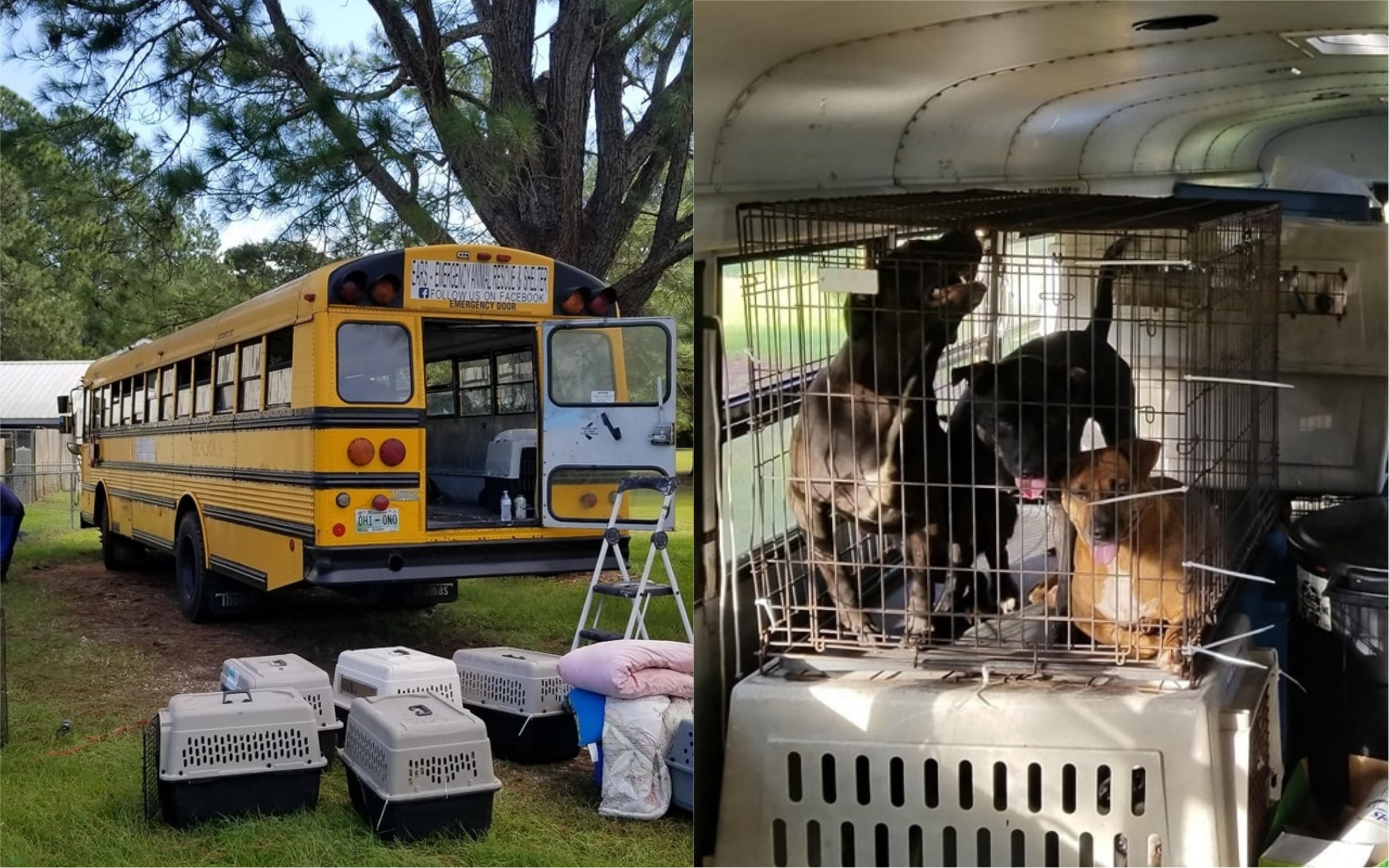 Pet lover helps dozens of cats and dogs escape Hurricane Florence on