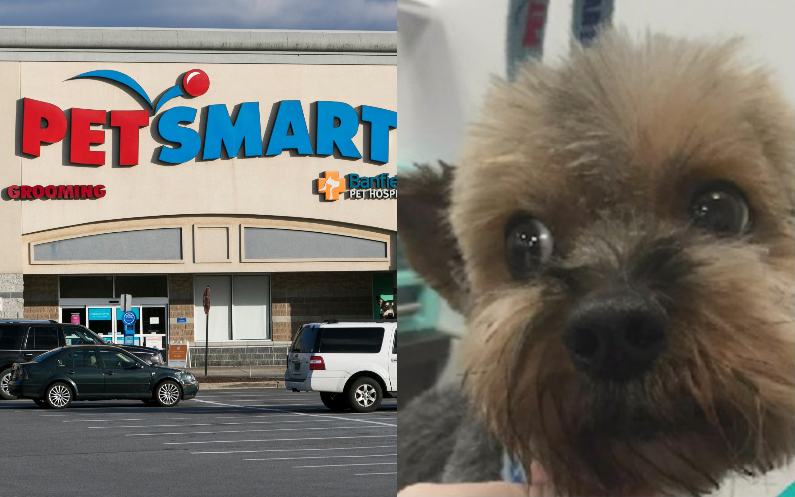 Best Dog Trimmers 2020 Investigation finds 47 dogs died after grooming at PetSmart over