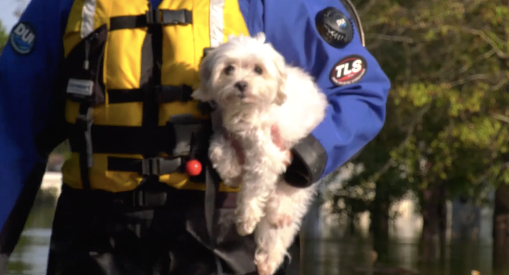 Dog Rescued After Spending Week Floating On Couch In Flooded Home After Hurricane Florence