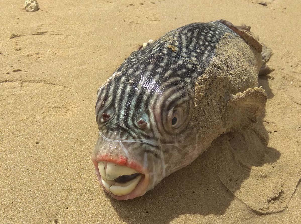 Weird Unknown Fish 4