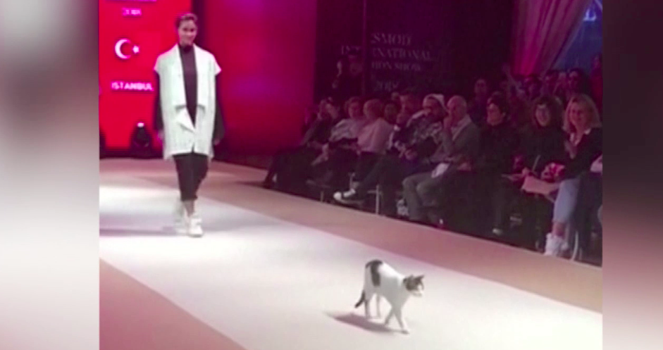 d25584c2a1 Viral video captures cat that crashed the fashion runway and completely  stole the show