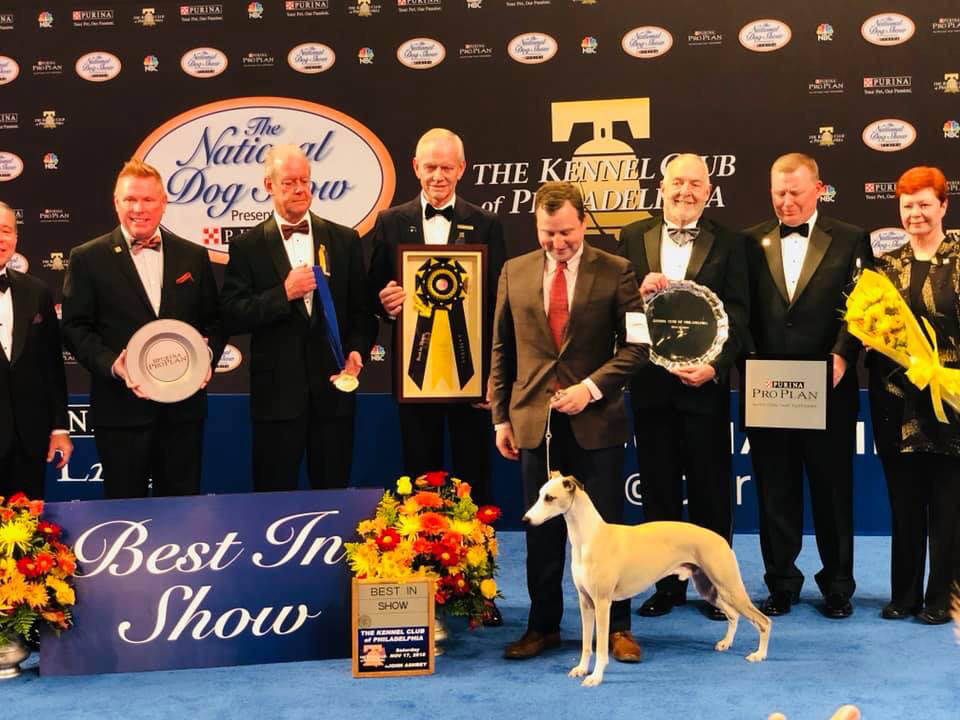 2018 National Dog Show Whiskey The Whippet Wins Best In Show At
