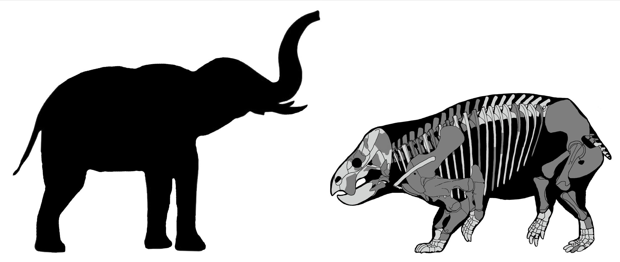 """Discovery of ancient elephant-sized herbivore called """"startling"""""""