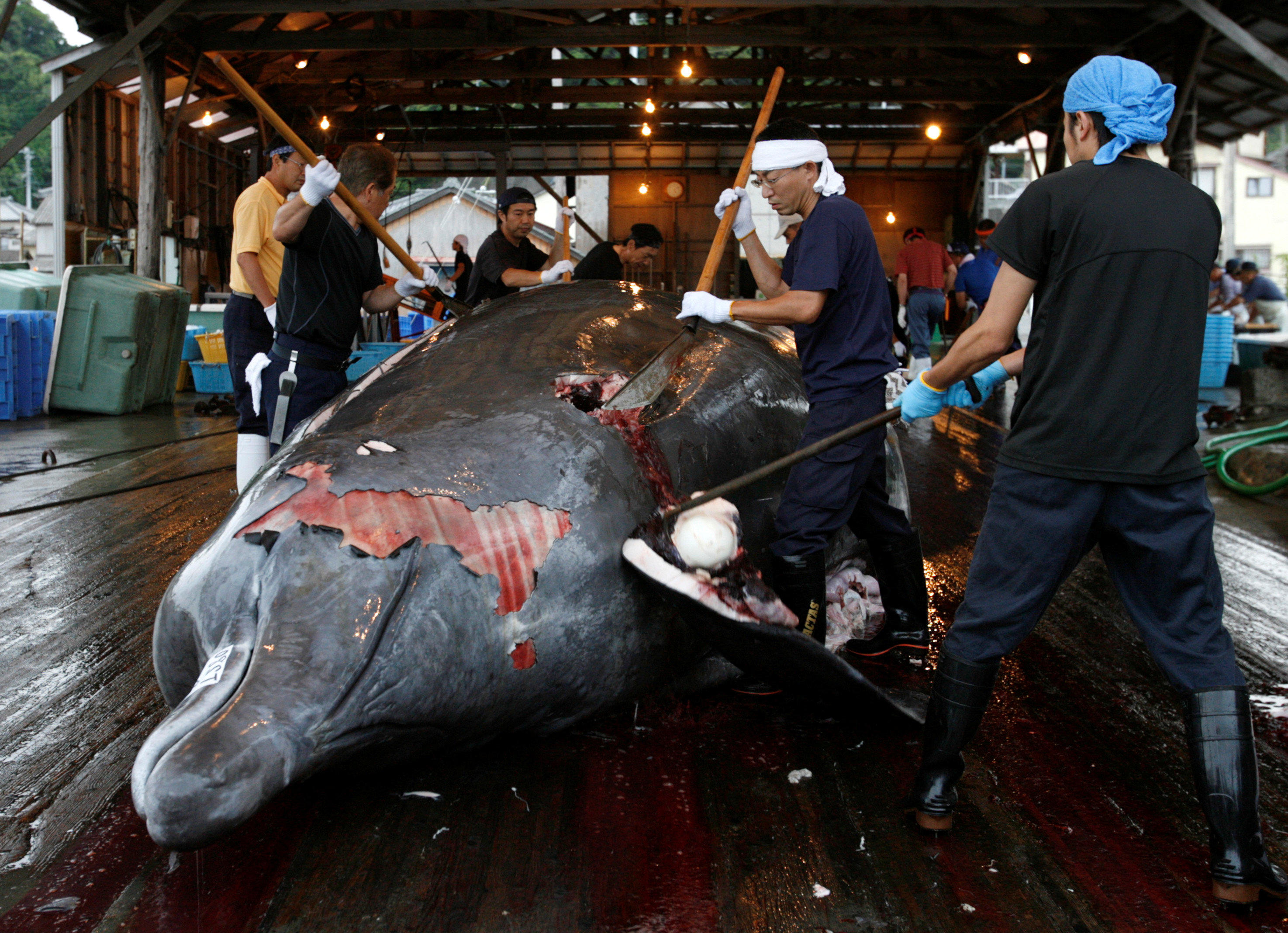 Japan to resume commercial whaling - CBS News