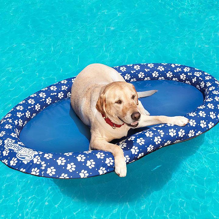cbsnews-summer-3-dog-raft.jpg