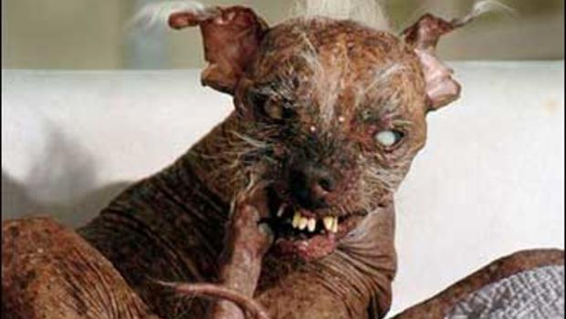 The Ugliest Dog On Earth