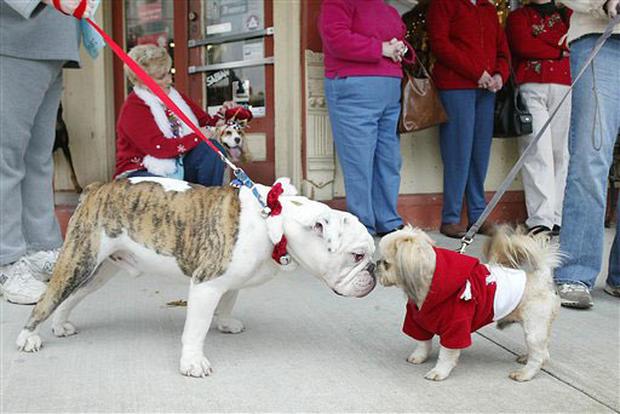 Santa Paws