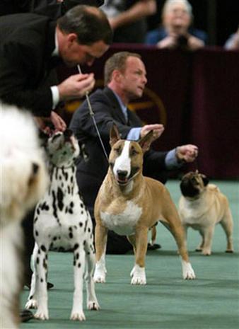 2006 Westminster Dog Show