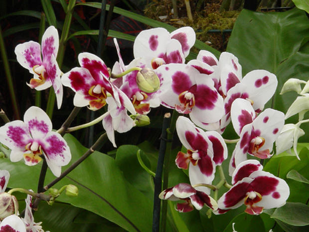 2006 Orchid Show