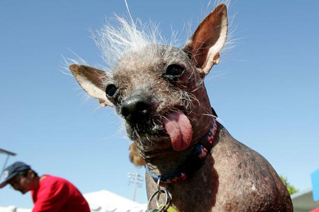 Doggone Ugly