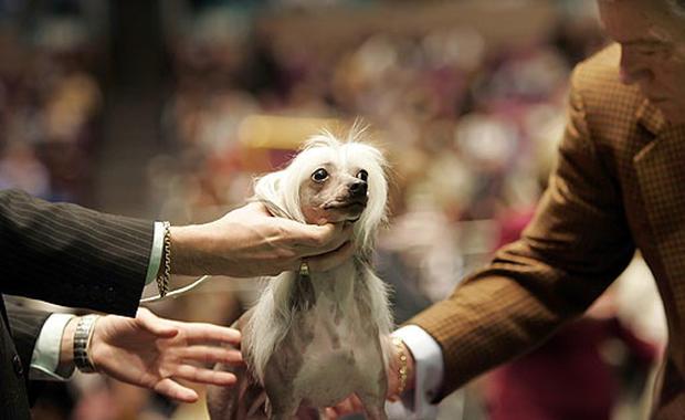 2007 Westminster Dog Show