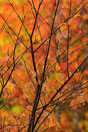Vermont Foliage Tour