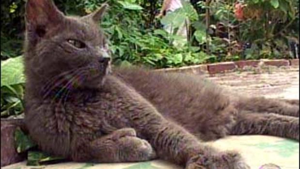 Fight Over Hemingway's Cats