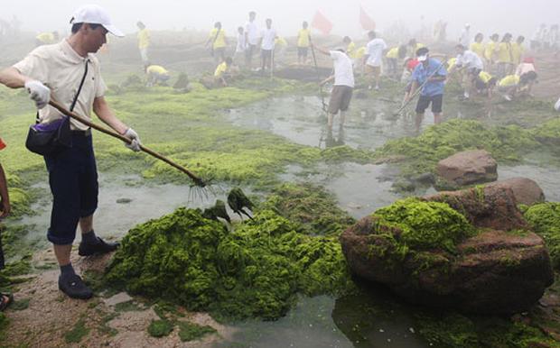 Green With Algae