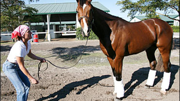 Nicanor, the full brother of the Kentucky Derby winner Barbaro