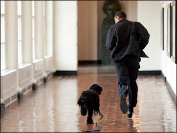 Obama And Bo Run