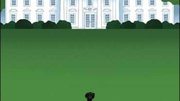 Bo on the White House lawn, from the cover of The New Yorker magazine.