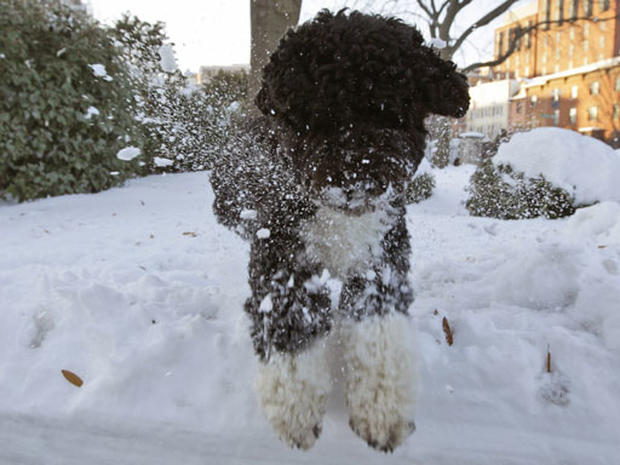 White House Snow and Bo