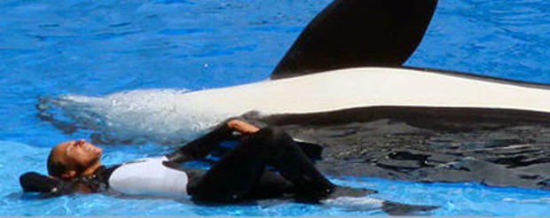 Dawn Brancheau SeaWorld Trainer Killed - Photo 1 - Pictures - CBS News