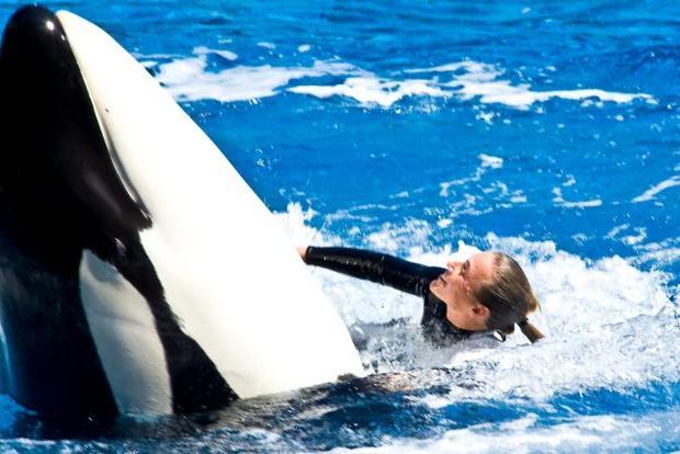 Dawn Brancheau SeaWorld Trainer Killed - Photo 12 - Pictures - CBS News
