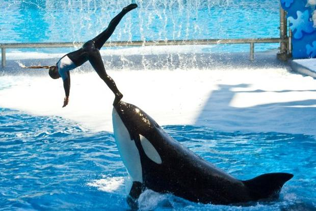 Dawn Brancheau SeaWorld Trainer Killed - Photo 1 - Pictures