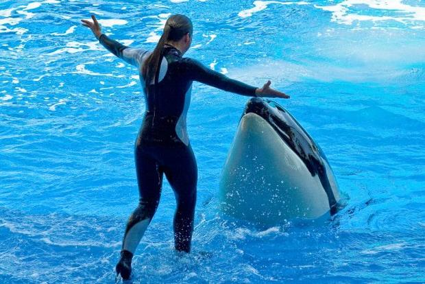 Dawn Brancheau SeaWorld Trainer Killed