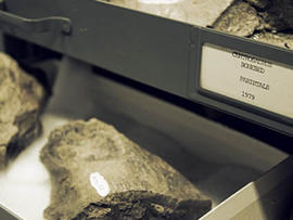Alberta Dinosaur Bonebed is Largest ever Found