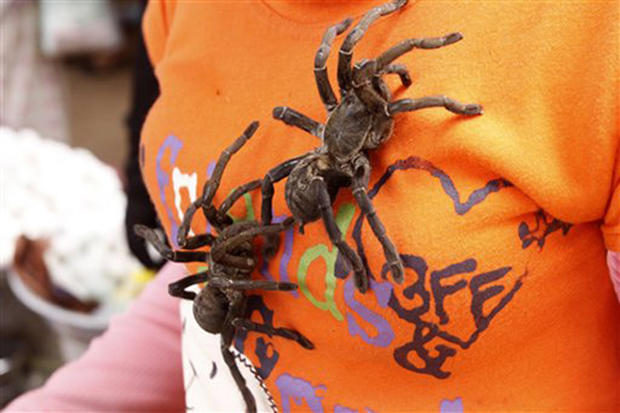 Cambodian Tasty Treat: Deep-Fried Spiders
