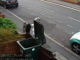 Woman Who Tossed Cat into Trash Gets Police Protection