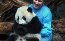 The Panda Breeding Center in Chengdu, China
