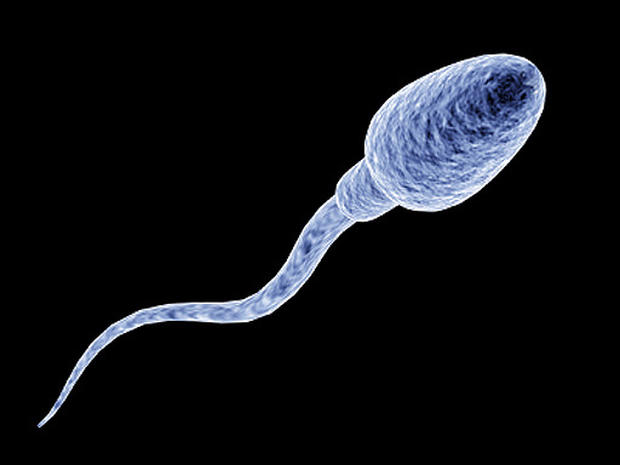 Informations for sperm cell photo 533