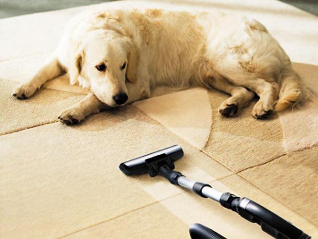 dog-vacuum.jpg
