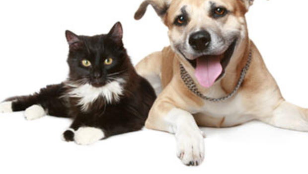 Study Shows Dogs Are Much Smarter Than Cats