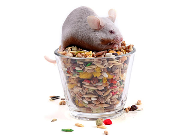 mouse_000002453015XSmall.jpg