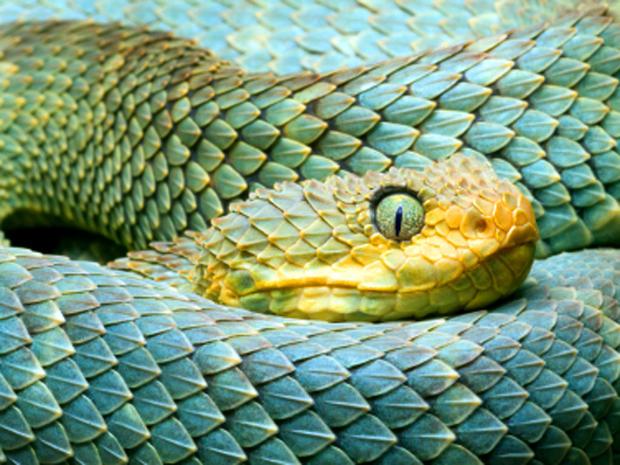 snake_000009801682XSmall.jpg